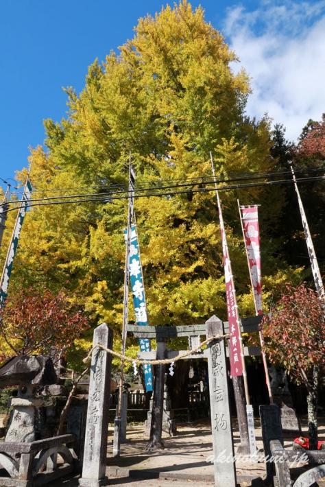 筒賀の大銀杏-2(2018年11月2日:g7x-mark2で撮影)