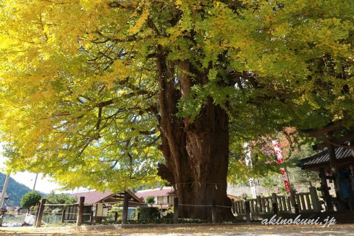筒賀の大銀杏-5(2018年11月2日:g7x-mark2で撮影)