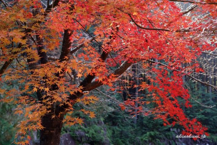 秋の高林坊-3(2018年11月11日:g7x-mark2で撮影)