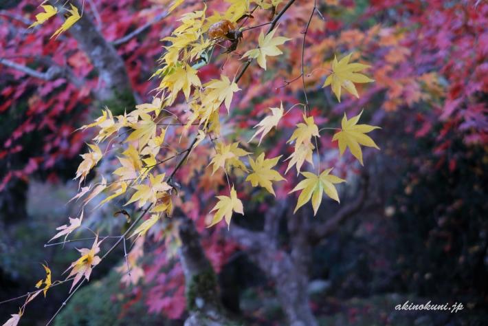 秋の高林坊-4(2018年11月11日:g7x-mark2で撮影)