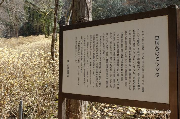 安芸高田市向原坂寺山 虫居谷のミツマタ 説明板
