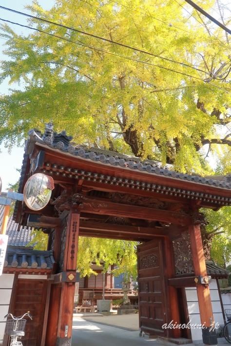 安楽寺の門と銀杏