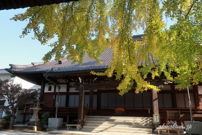 安楽寺の垂れ下がる銀杏の枝