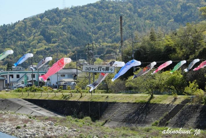 三篠川の鯉のぼり 2020年 3