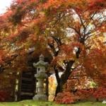 教龍寺の紅葉 樹齢300年の紅葉