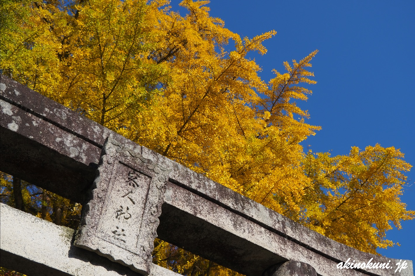 客人神社 鳥居と銀杏