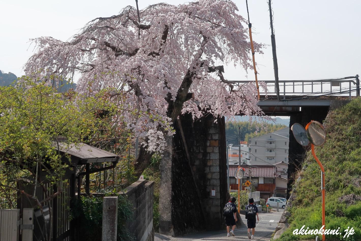 戸坂 芸備線陸橋そばの桜