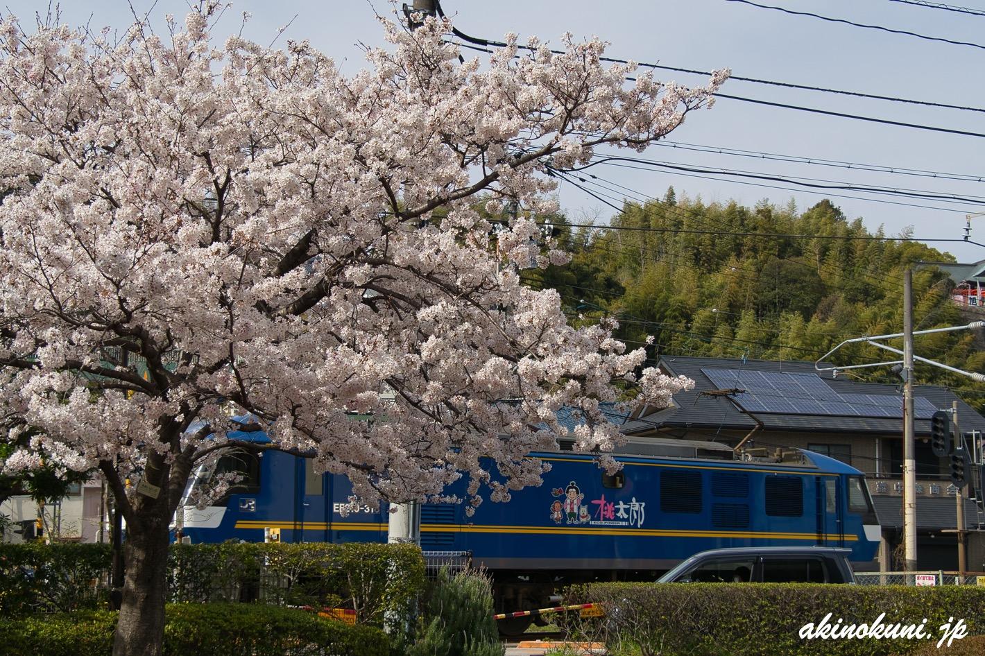 桜とEF210桃太郎 2021年